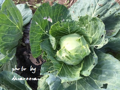 2014.10.26菜園6