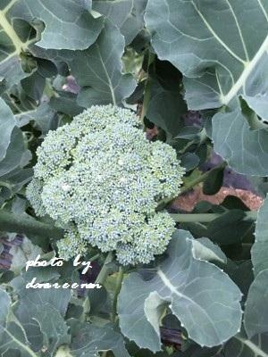 2014.11.11菜園4