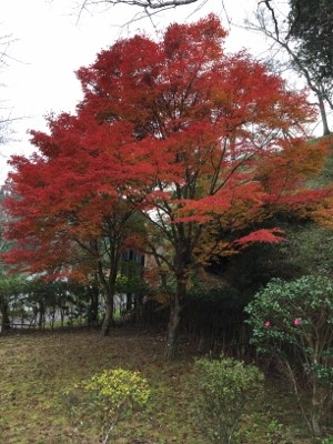 2014.11.8 日田5