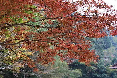 2014.11.8竜門の滝24