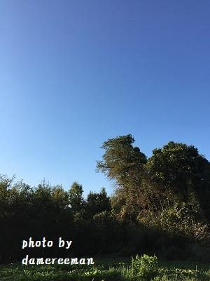 2014.11.15開墾地 ジャガイモ4