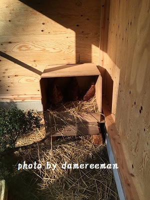 2014.11.22鶏小屋8