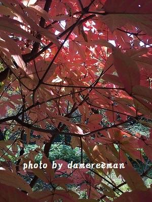 2014.11.23紅葉