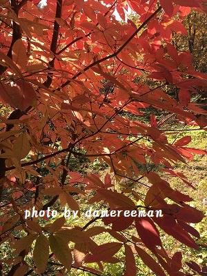 2014.11.23紅葉3