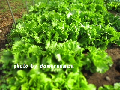 2014.12.13菜園