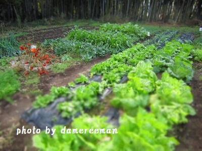 2014.12.13菜園3