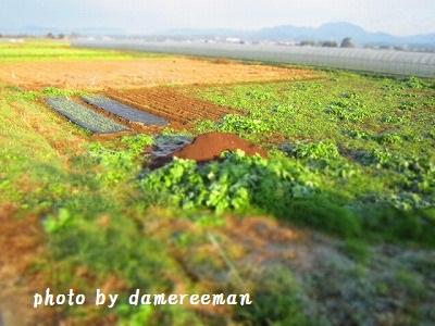 2014.12.14第三の畑