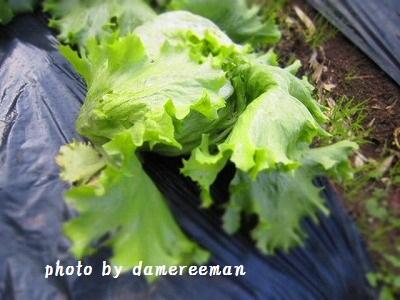 2014.12.14菜園