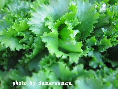 2014.12.14菜園4