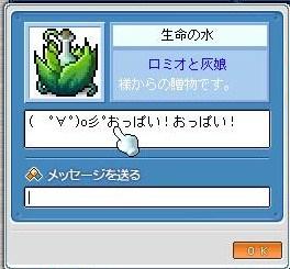 Maple110805_195846.jpg