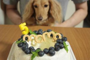 モモのケーキ?