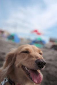 砂だらけ^^;