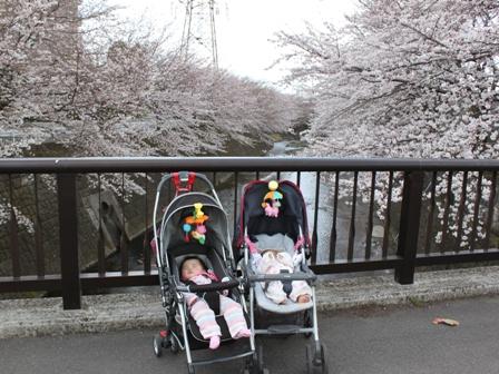 cherryblossoms2010_01.jpg