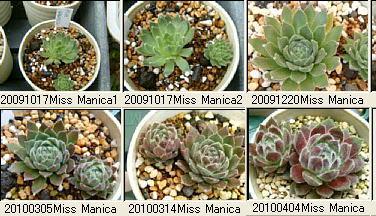 20100404Miss Manica2
