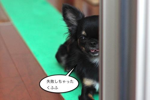 ichi_10016.jpg
