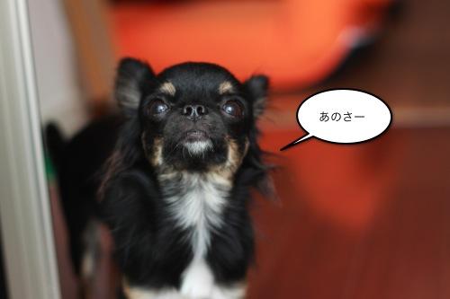 ichi_10024.jpg