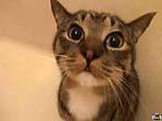 【無修正】京都着物美人の自宅で本番ファック!猫かわえぇww