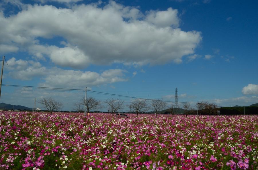 _新幹線DSC_0400