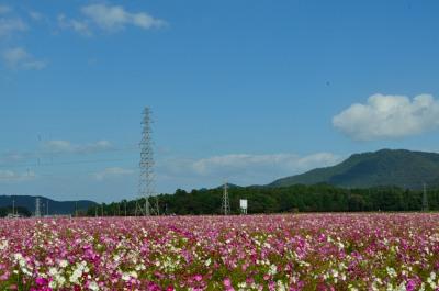 _新幹線DSC_0405