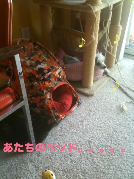 photo(42)_20110609001423.jpg