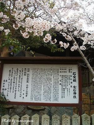 生石神社 桜