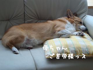 ソファ~紋次郎
