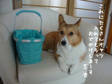 ライゼンタールバッグと杏