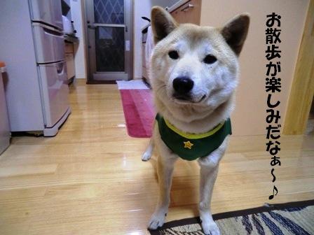 CIMG福ハーネス3