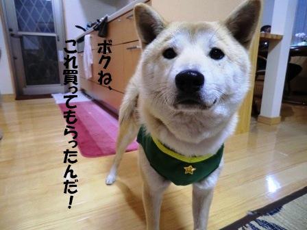 CIMG福ハーネス1