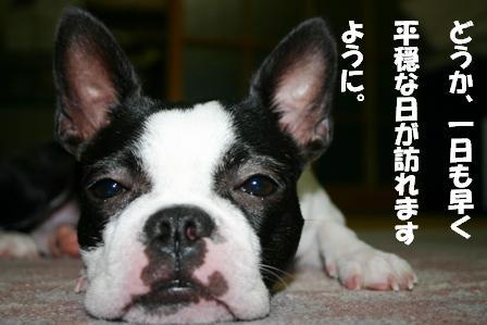 IMG_お見舞い