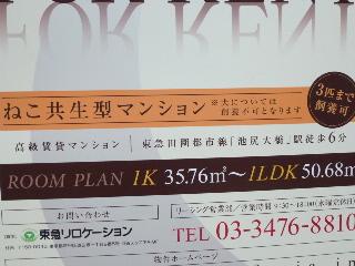 P1010413(1).jpg