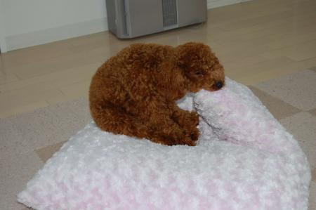 クッション守る犬