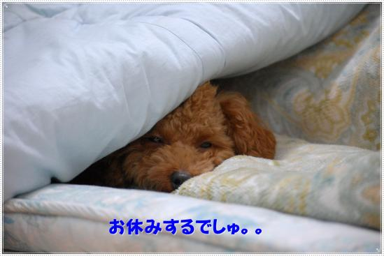 おやすみするでしゅ。