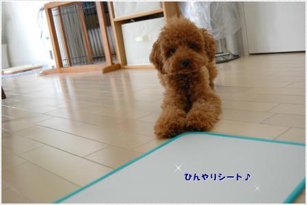 DSC_0159-1.jpg