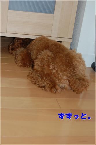 DSC_0229-2.jpg