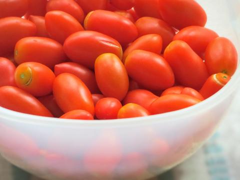 摘みたてのミニトマト