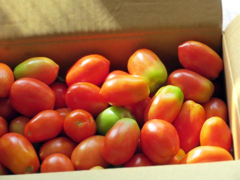 段ボールいっぱいのベル型トマト