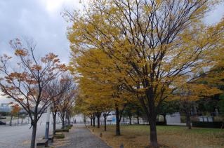 少ないながら秋の風景を