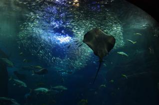 餌に群がる多種多様な魚達