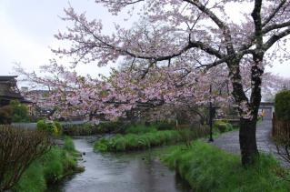 まだ桜が楽しめるのはいいね