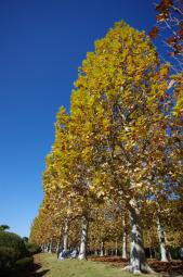 ここは秋まっしぐら