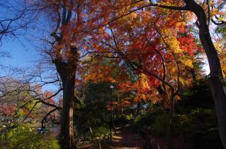井の頭は今まさに秋