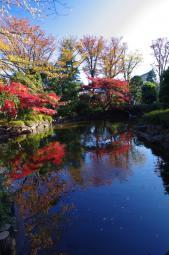 こっちの日本庭園も負けないでー