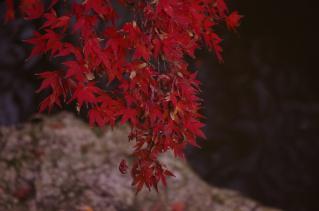 紅葉真っ盛りです