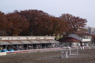 乗馬センターも秋色に