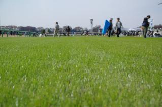 この時期に良い芝状態ですね