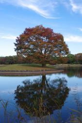 水面に映る、逆さ秋
