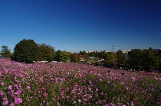 花摘みされてもまだまだ良い眺めです