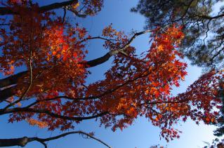 今、まさに秋色