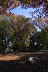 まだ秋は始まったばかりのようです